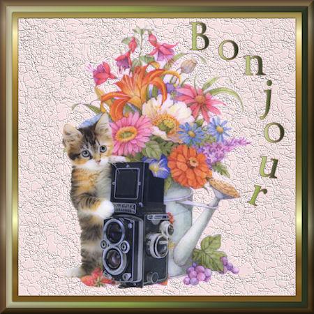 chat-bonjour-fleurs-flora